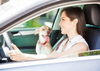 Safety Tips For Driving With Dogs