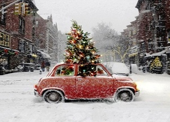 Carry Christmas Tree Carefully Without Harming Your Beloved Car
