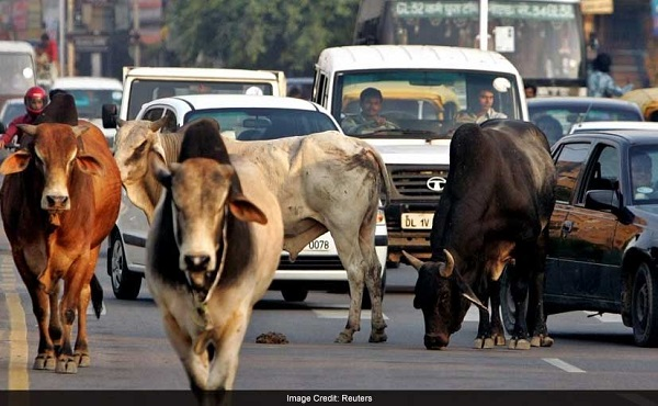 Cows on Roads